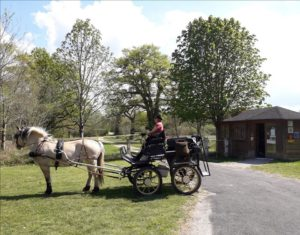 balade_caleche_vallee_loire_cool_attelage_cheval